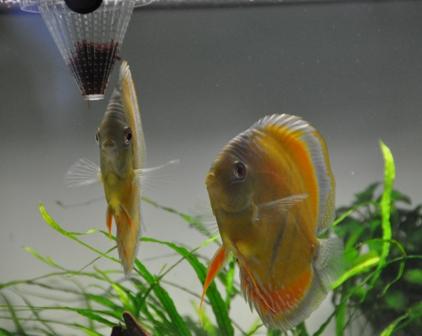 2009年4月新魚メキシカン 021.jpg