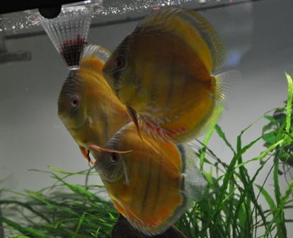 2009年4月新魚メキシカン 033.jpg