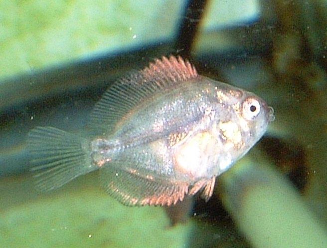 稚魚1ヶ月1.jpg