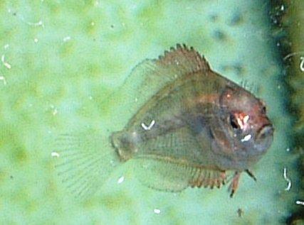 稚魚1ヶ月2.jpg