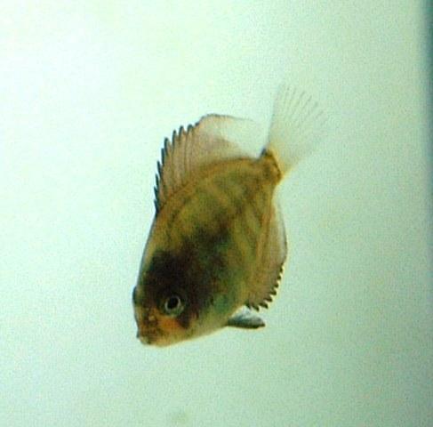 稚魚顔黒 022.jpg