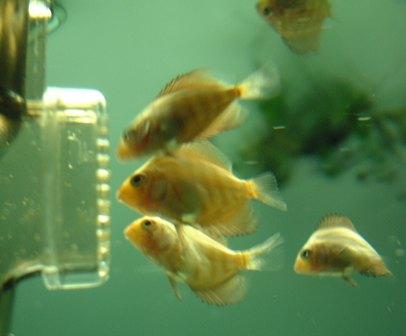 稚魚1ヶ月3週間 (2).jpg